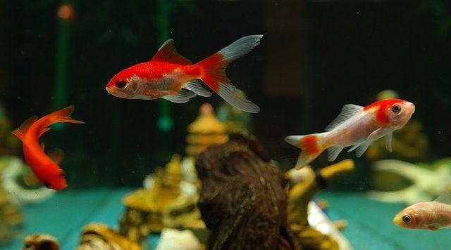 mantenimiento de un acuario