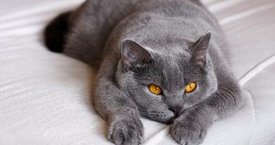 tos en gatos