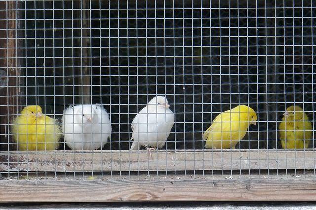 enfermedades pájaros