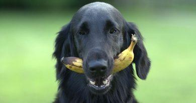 frutas y verduras para los perros