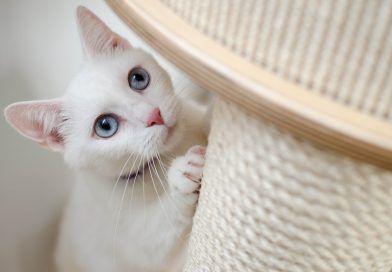 rascadores-para-gatos